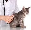 Ветеринарные клиники в Жарковском
